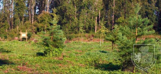 Der frisch gepflanzte Brauchtumswald